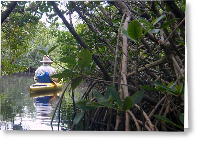 Mangrove Kayaker Greeting Card by Steven Scott