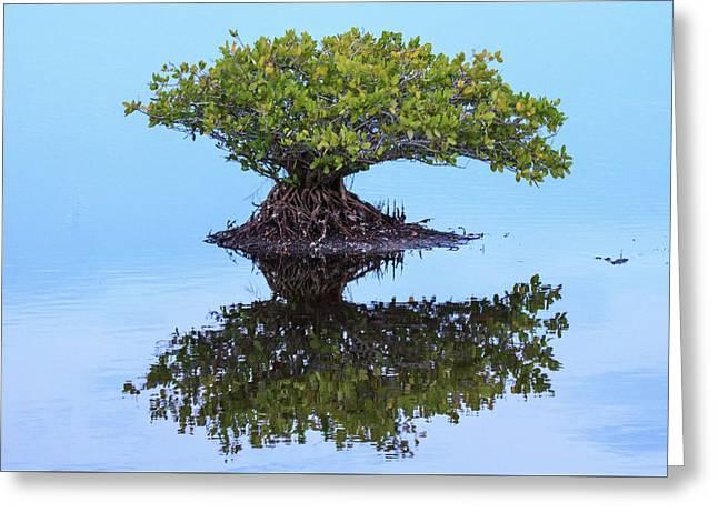 Mangrove Reflection Greeting Card