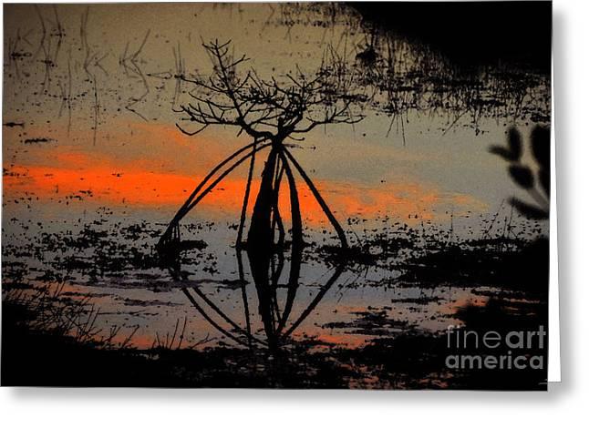 Mangrove Silhouette Greeting Card by David Lee Thompson