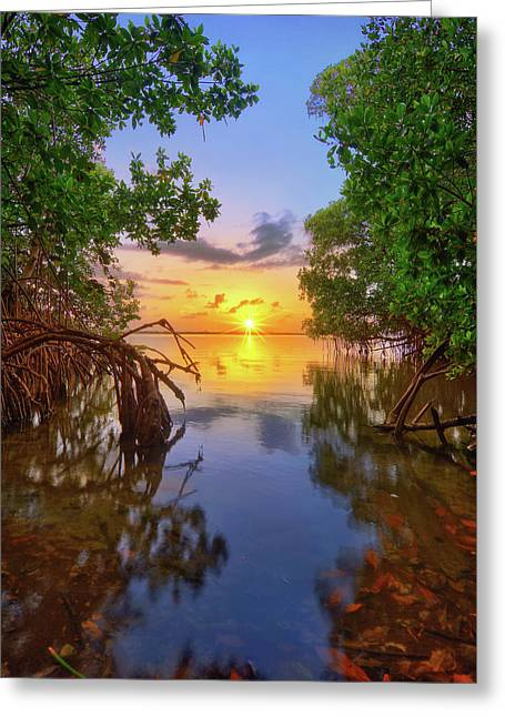 Greeting Card featuring the photograph Mangrove Sunset From Jensen Beach Florida by Justin Kelefas