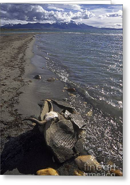 Mani Stone At Lake Manasarovar - Tibet Greeting Card