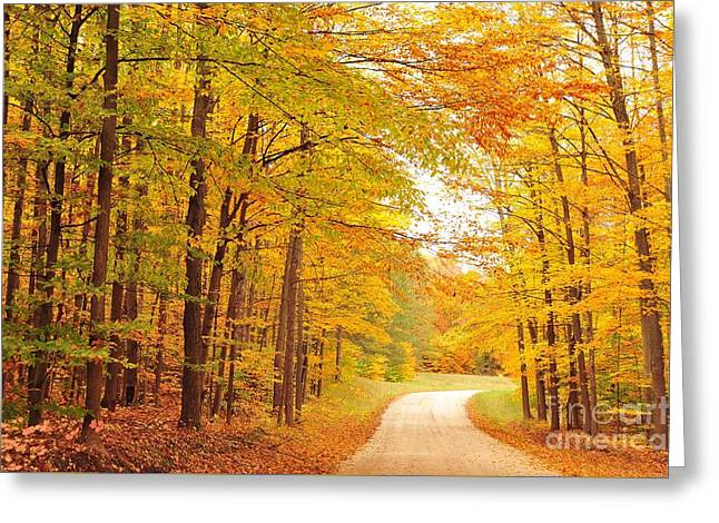 Manisee National Forest In Autumn Greeting Card