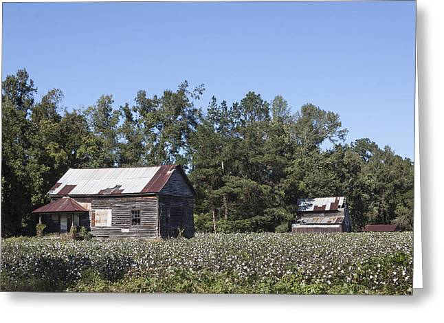 Manning Cotton Field With Barns Greeting Card