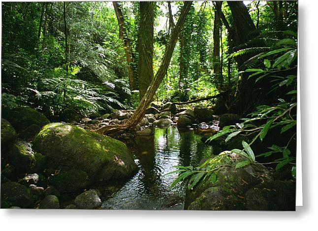 Manoa Valley Stream Greeting Card