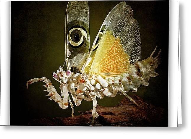 Mantis 24 Greeting Card by Ingrid Smith-Johnsen
