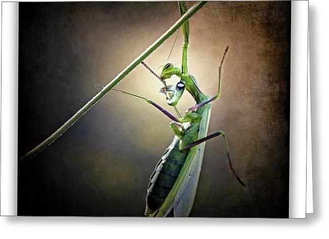 Mantis 26 Greeting Card by Ingrid Smith-Johnsen