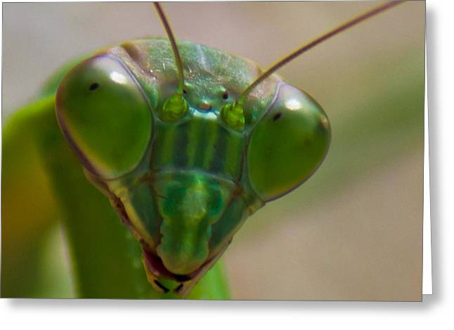Mantis Face Greeting Card by Jonny D
