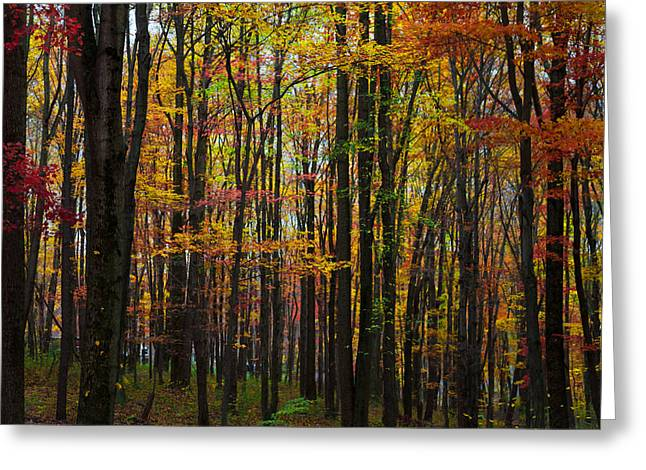 Many Colors Of Autumn Greeting Card by April Reppucci
