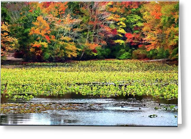 Many Colors Of Autumn Greeting Card