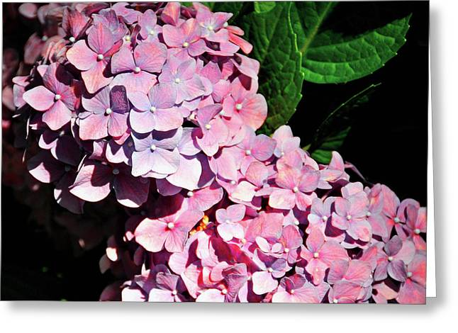 Many Petals Greeting Card by JAMART Photography