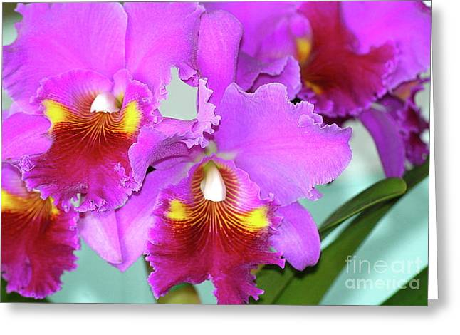 Many Purple Orchids Greeting Card by Lehua Pekelo-Stearns