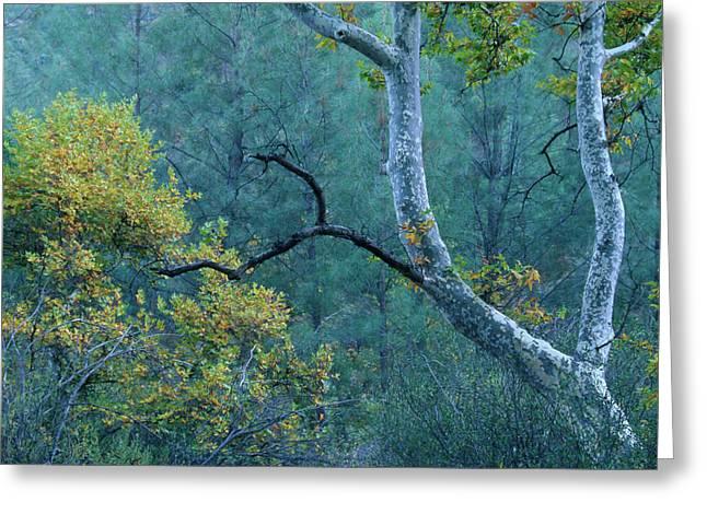 Manzana Trail - San Rafael Wilderness Greeting Card