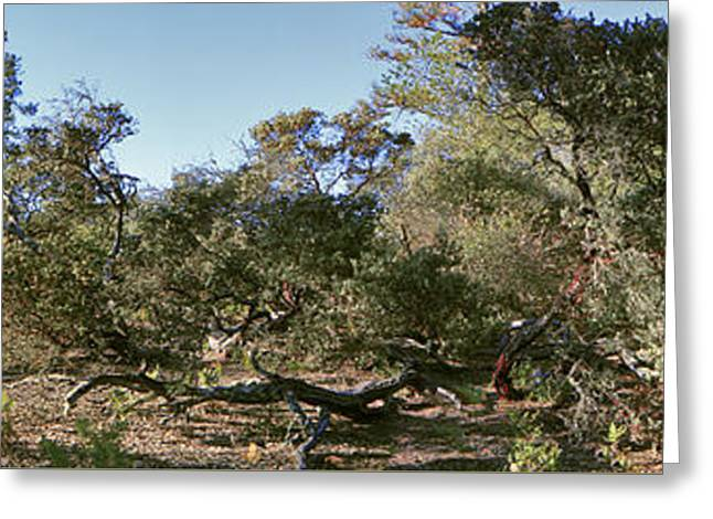 Manzanita And Oaks Greeting Card by Larry Darnell