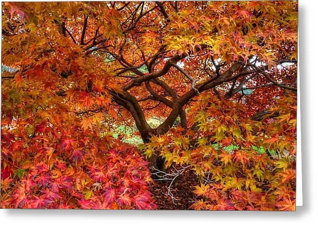 Maple Beauty Greeting Card
