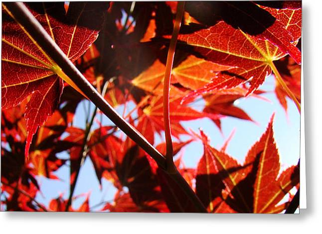 Maple Fire Greeting Card