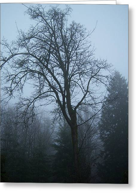 Maple In Fog Greeting Card by Ken Day