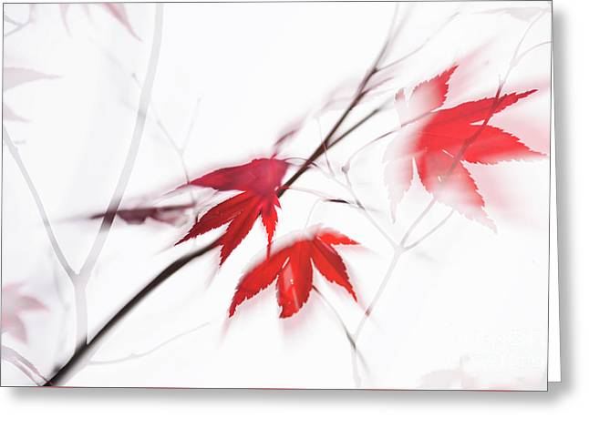 Red Maple Leaves Abstract 1 Greeting Card