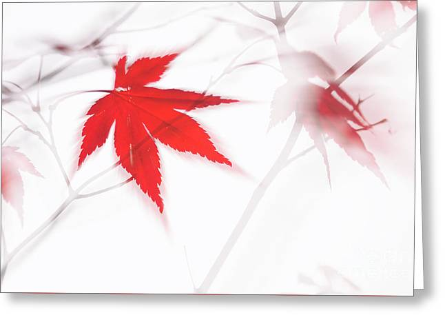 Maple Leaf Abstract 2 Greeting Card
