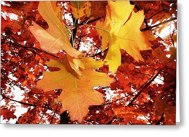 Maple Leaf Bower Greeting Card