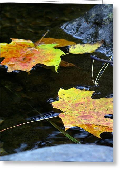 Maple Leaf Greeting Card by Sean Shaw