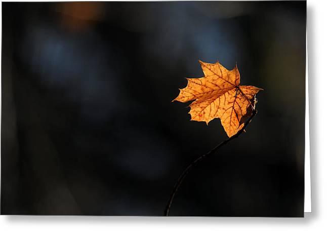 Maple Leaf Setauket New York Greeting Card