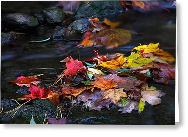 Maple Leaves-0001 Greeting Card by Sean Shaw