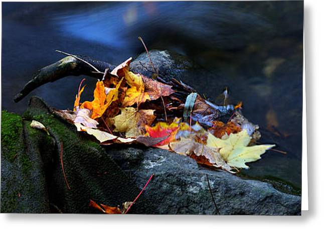 Maple Leaves-0004 Greeting Card by Sean Shaw