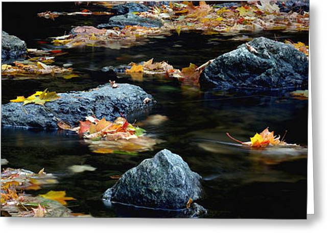 Maple Leaves-0008 Greeting Card by Sean Shaw