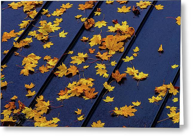 Maple Leaves On A Metal Roof Greeting Card