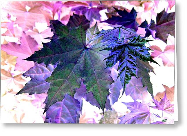 Maple Magnetism Greeting Card by Will Borden