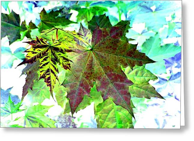 Maple Mania 24 Greeting Card by Will Borden
