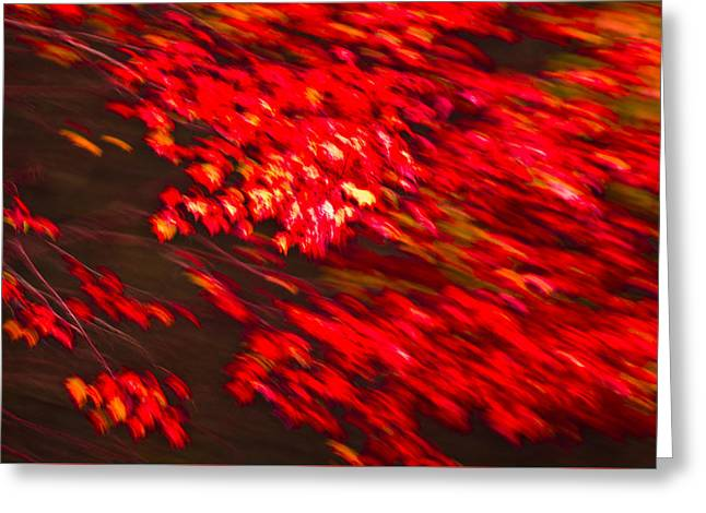 Maple Red Abstract Greeting Card