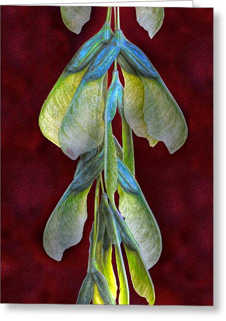 Maple Seeds Greeting Card by Tom Mc Nemar