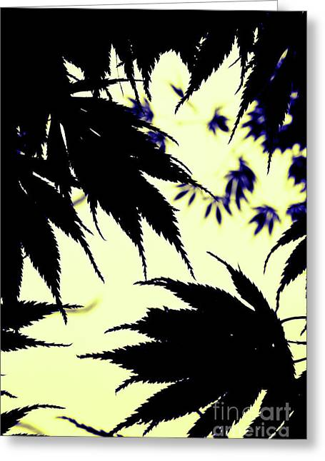 Maple Silhouette Greeting Card