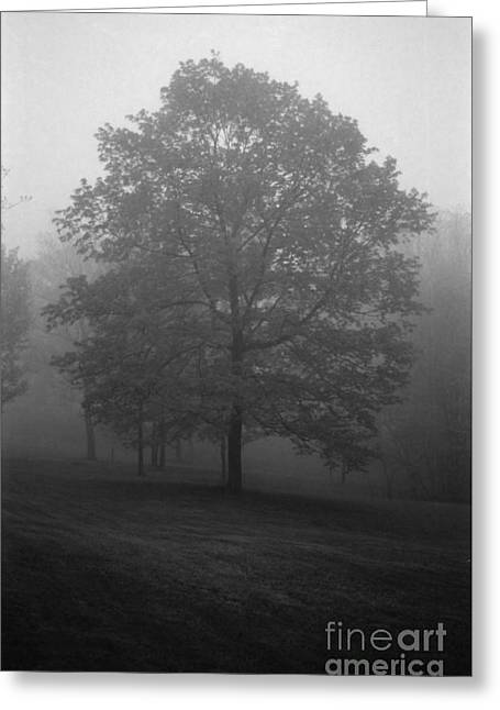 Maple Tree In Fog Greeting Card