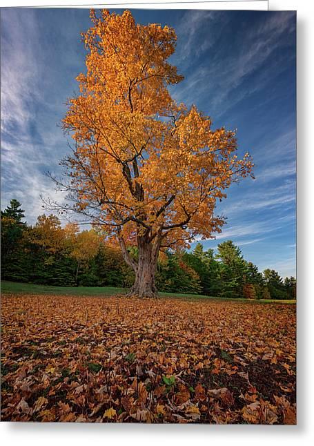 Maple Tree In Vaughan Woods Greeting Card by Rick Berk