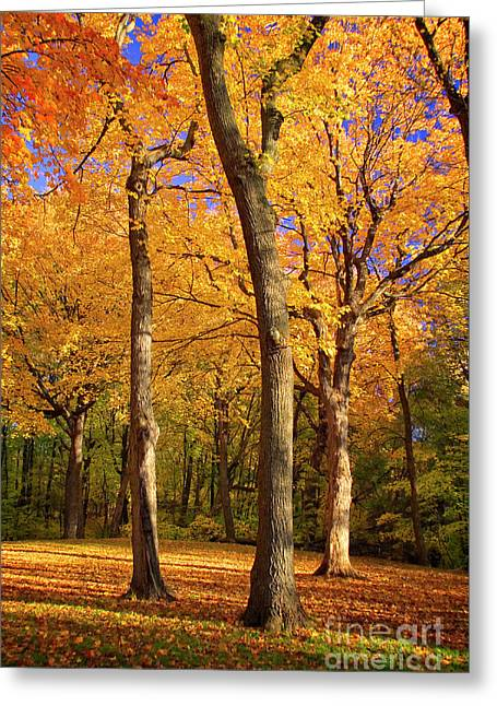 Greeting Card featuring the photograph Maple Treo by Scott Kemper