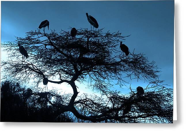 Marabou Stork, Ethiopia, Africa Greeting Card