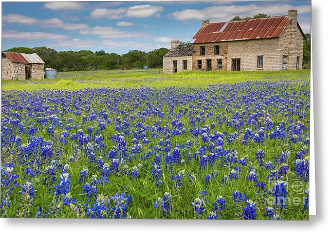 Marble Falls Bluebonnets Greeting Card