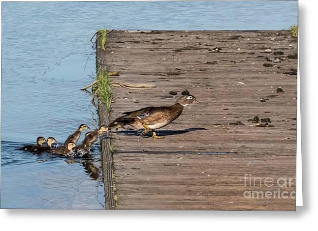 March Of The Wood Ducks Greeting Card