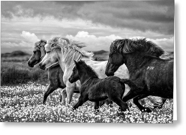 March Of The Mares Greeting Card