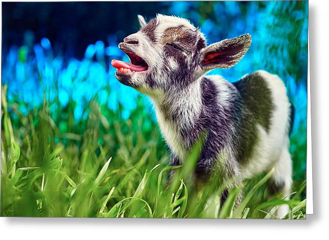 Baby Goat Kid Singing Greeting Card