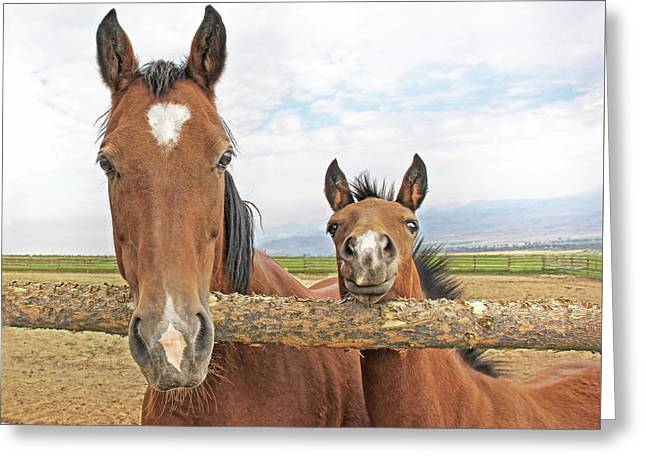 Mare And Filly Horses Greeting Card by Jennie Marie Schell