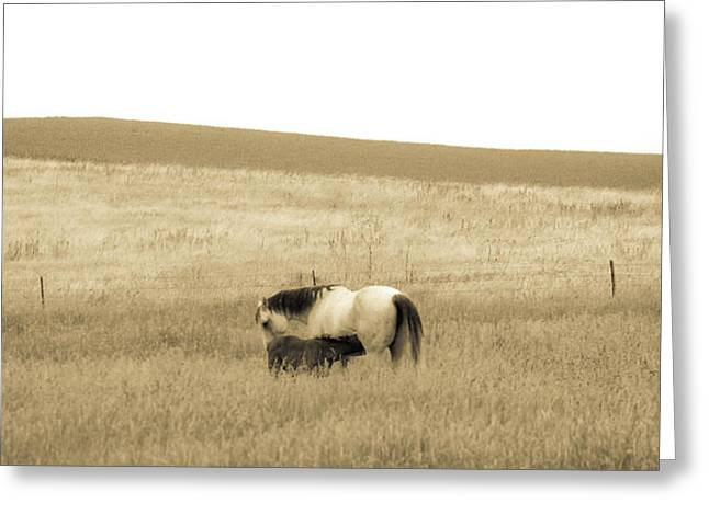 Mare And Foal  Greeting Card