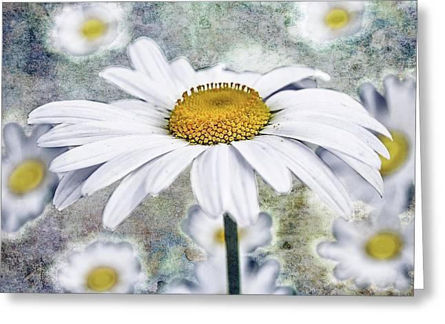 Marguerita Bonita Greeting Card