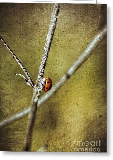 Marienkaefer - Ladybird Greeting Card
