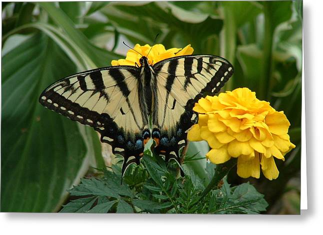 Marigold And Butterfly Greeting Card by Emerald GreenForest