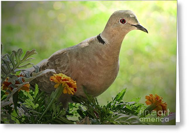 Greeting Card featuring the photograph Marigold Dove by Debbie Portwood