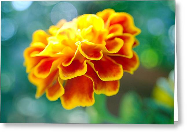 Marigold Greeting Card