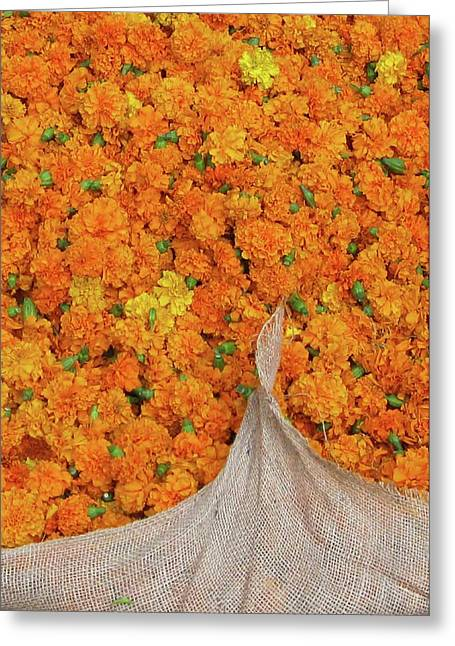 Marigolds II Greeting Card by David L Griffin